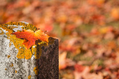 Maple leaf on tombstone in autumn cemetery Stock Photos