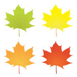 Maple leaf in various colors Royalty Free Stock Photos