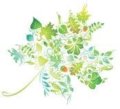 Maple leaf. Stock Photos