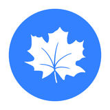 Maple Leaf vector icon in black style for web Royalty Free Stock Image