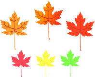 Maple leaf - vector icons. Maple leaf, vector illustration, no gradients, easy replacement of colors Stock Photos