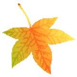 Maple leaf vector illustration Royalty Free Stock Photo