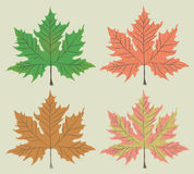 Maple leaf vector Royalty Free Stock Photography