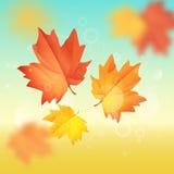 Maple leaf vector illustration. Hello autumn. Maple leaf falling in the autumn sky vector illustration Stock Photo