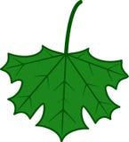Maple Leaf royalty free illustration
