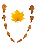 Maple leaf in vignette Royalty Free Stock Photo