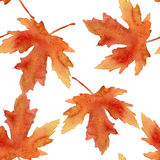 Maple-leaf watercolor pattern Royalty Free Stock Photography