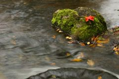 Maple leaf in waterfall Royalty Free Stock Image