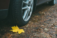 Maple leaf, wheel and tyre closeup on dirty autumn road Stock Photography