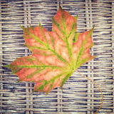 A  maple leaf on wicker background Royalty Free Stock Photo