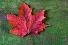 Maple leaf on wood background Royalty Free Stock Images