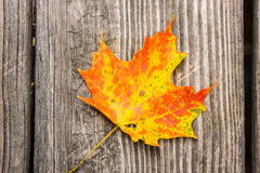 Maple Leaf on Wood Stock Photography