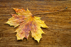 Maple leaf on the wooden background. Autumn maple leaf on the textured wooden background Royalty Free Stock Photo