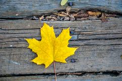 Maple leaf on wooden background stock photography