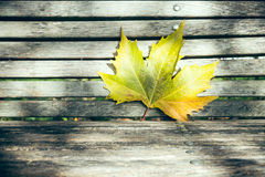Maple leaf on a wooden bench Royalty Free Stock Photos