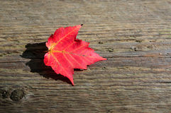 Maple leaf on the wooden plank Royalty Free Stock Image
