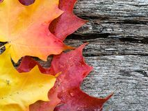 Maple leaf on wooden table Stock Image