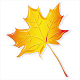Maple leaf yellow Royalty Free Stock Photos