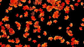 Maple leafs falling background, Alpha Channel, stock footage stock video