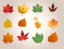Maple leafs illustration vector Stock Photo