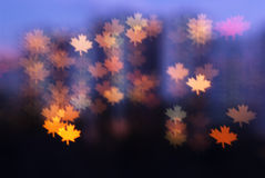 Maple leafs lights background Royalty Free Stock Photography