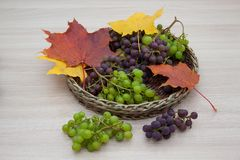 Maple leafs and ripe grapes isolated on a wooden background. Autumn still life. royalty free stock image