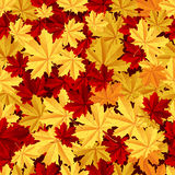 Maple leafs seamless pattern Stock Images
