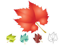 Maple leafs - vector Royalty Free Stock Photos