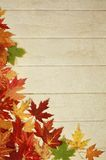 Maple leave Royalty Free Stock Image