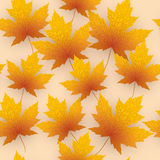 Maple leave fall vector background.  Stock Image