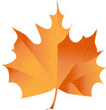 Maple leave. Illustration of a maple leave  with dwtails Stock Photo