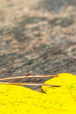 Maple leave and needles on wooden bank Stock Photography