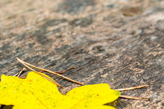 Maple leave and needles on wooden bank Stock Photos