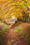 Maple Leave Tunnel in Japan. Kawaguchi, Japan at the maple leave tunnel royalty free stock photos