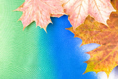Maple leaves. Arranged on colorful textured background Royalty Free Stock Photography