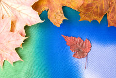 Maple leaves. Arranged on colorful textured background Royalty Free Stock Photo