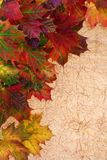Maple Leaves. As closeup at the left top corner with text free space at the right bottom corner Stock Images