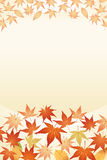Maple leaves. And other leaves Stock Photo