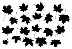 Maple leaves Royalty Free Stock Image