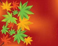 Maple leaves. Vector abstract background of maple leaves Stock Photos
