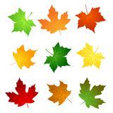 Maple leaves stock illustration