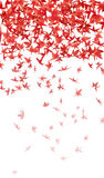 Maple leaves. Droping in the air Royalty Free Stock Image
