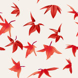 Maple leaves. Seamless color background Stock Photography