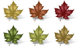 Maple Leaves. Illustration of isolated Maple Leaves Royalty Free Stock Photography