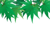 Maple leaves. Backgroundframe from  maple  leaves. Vector illustration Stock Images