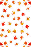 Maple leaves abstract. Maple leaves turning colour background abstract Royalty Free Stock Photography