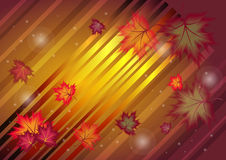 Maple leaves abstract background Stock Image