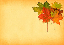 Maple leaves against paper royalty free stock photo
