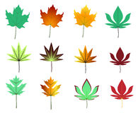 Maple leaves assortment Stock Photography