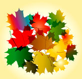 Maple leaves. Maple autumn falling leaves background Royalty Free Illustration